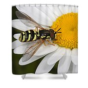 Elegant Hoverfly Shower Curtain