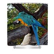 Elegant Parrot Shower Curtain