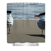 Elegant Tern Shower Curtain