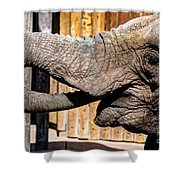 Elephant Feeding Time At The Zoo Shower Curtain