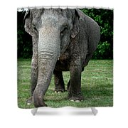 Elephant Greet Shower Curtain