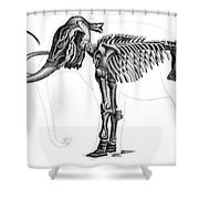Elephas, Extant Cenozoic Mammal Shower Curtain