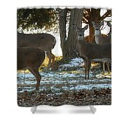 Eleven Deer Standing Shower Curtain