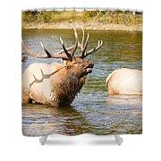 Elk Bugle Estes Lake Colorado Shower Curtain