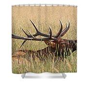 Elk Bugle Shower Curtain