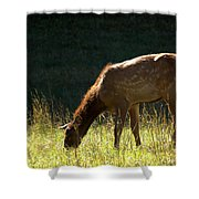 Elk Calf Shower Curtain