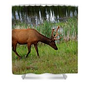 Elk Cervus Elaphus Jasper National Shower Curtain