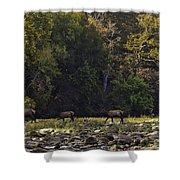 Elk Herd Crossing Buffalo National River Shower Curtain