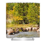 Elk Herd With Autumn Colors Shower Curtain