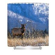 Elk In Forest, Banff National Park Shower Curtain