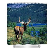 Elk In Summer By Mountain Lake Shower Curtain