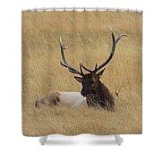 Elk In The Meadow Shower Curtain