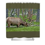 Elk Meadow  Shower Curtain