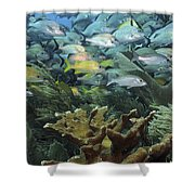 Elkhorn Coral With Schooling Grunts Shower Curtain