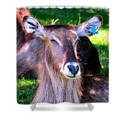 Ellipsis Waterbuck Shower Curtain