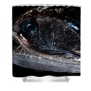 Elongated Loosejaw Shower Curtain