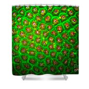 Emerald Coral Shower Curtain
