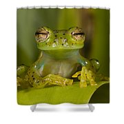 Emerald Glass Frog Centrolene Shower Curtain