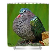 Emerald Ground Dove Shower Curtain