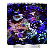 Emerged Starfish Shower Curtain