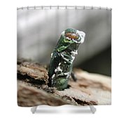 Emerging Ash Borer With Fungus Shower Curtain