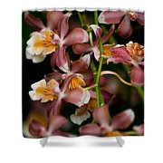Emma's Orchid Shower Curtain