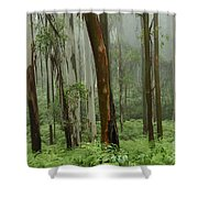 Australia Enchanted Forest Shower Curtain