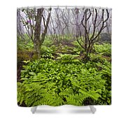 Enchanted Woodland Forest In Fog Blue Ridge Parkway In North Carolina Shower Curtain