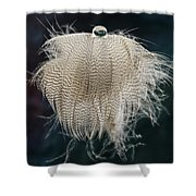 End Of The Feather Shower Curtain
