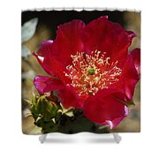 Englemann's Prickly Pear Cactus  Shower Curtain