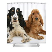 English Cocker Spaniels Shower Curtain