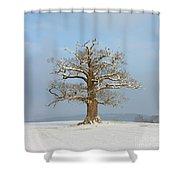 English Oak Shower Curtain