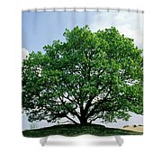 English Oak Quercus Robur In Spring Shower Curtain