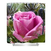 English Pink Rose Close Up Shower Curtain
