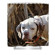 English Pointer On Point - D004001 Shower Curtain