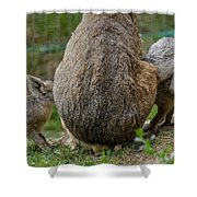 Enough For Everyone Shower Curtain