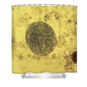 Entamoeba Histolytica Lm Shower Curtain by Eric V. Grave