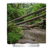 Entrance To Fern Canyon Shower Curtain
