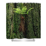 Epiphytic Fern Growing On Redwood Shower Curtain
