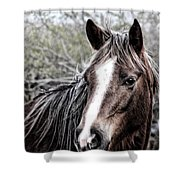 Equine Trance Shower Curtain