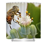 Eristalinus Taeniops Shower Curtain