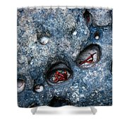 Eroded Rock With Dried Leaves Shower Curtain