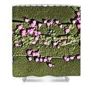 Escherichia Coli On A Cell Wall Shower Curtain