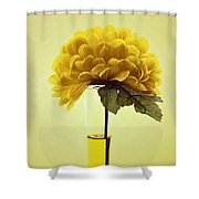 Estillo - S03-01q2 Shower Curtain by Variance Collections