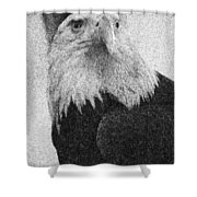 Etched Eagle Shower Curtain