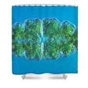 Euastrum Sp. Algae Lm Shower Curtain