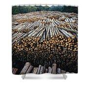 Eucalyptus Stacked Lumber Shower Curtain