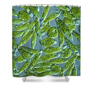 Euglena, Lm Shower Curtain