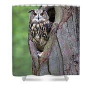 Eurasian Eagle-owl Bubo Bubo Looking Shower Curtain