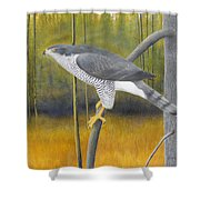 European Goshawk Shower Curtain